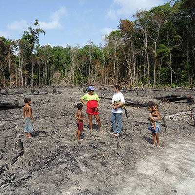 Helping To Reduce Deforestation In The Amazonian Rainforest, Brazil